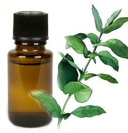Citroeneucalyptus - etherische olie - 10 ml
