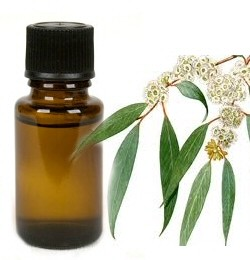 Eucalyptus - etherische olie - 5 ml