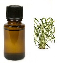 Citronella - etherische olie - 10 ml