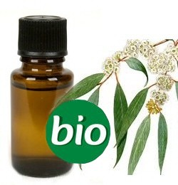 Eucalyptus BIO Etherische Olie 5 ml