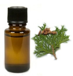 Thuja - etherische olie - 10 ml